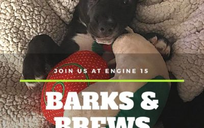 Join Us For Barks & Brews at Engine 15